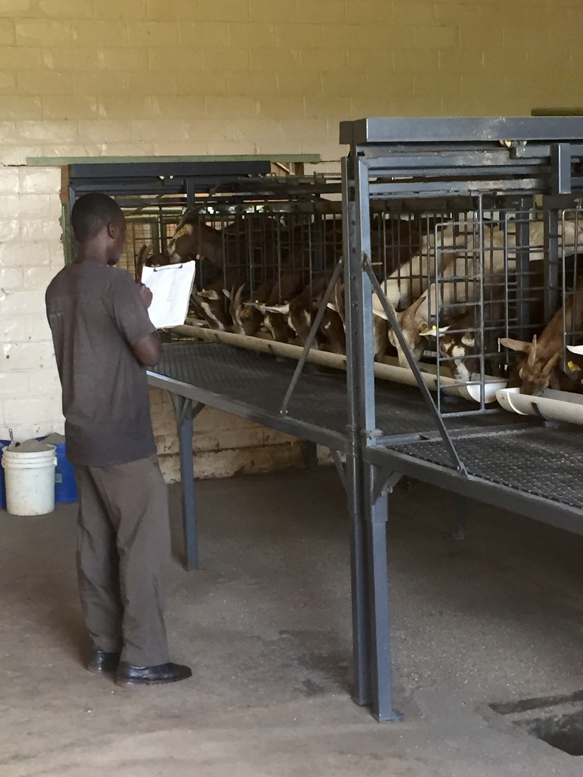 denis tracking milk production