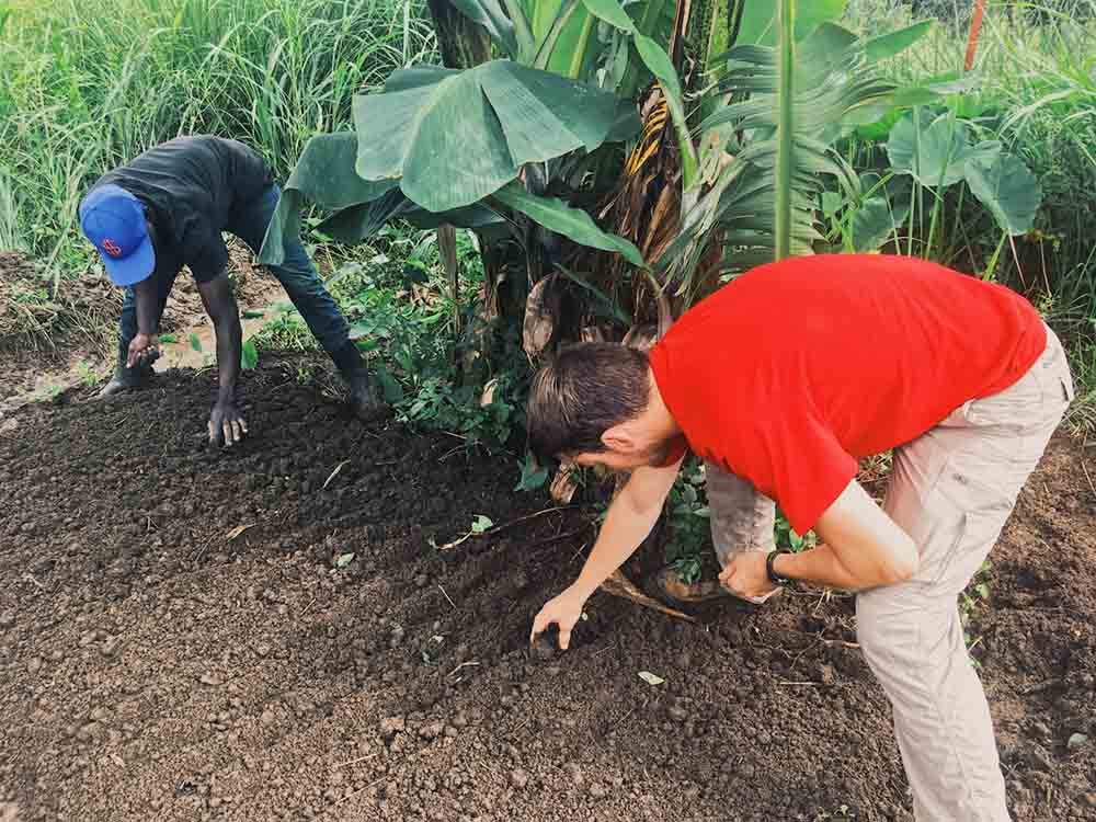 Seedbed planting