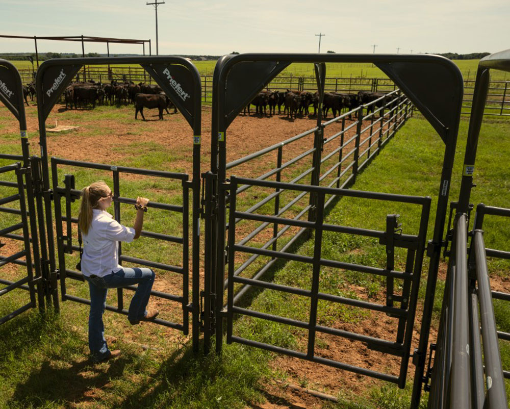 Charlotte Talbott looks at cattle in corral