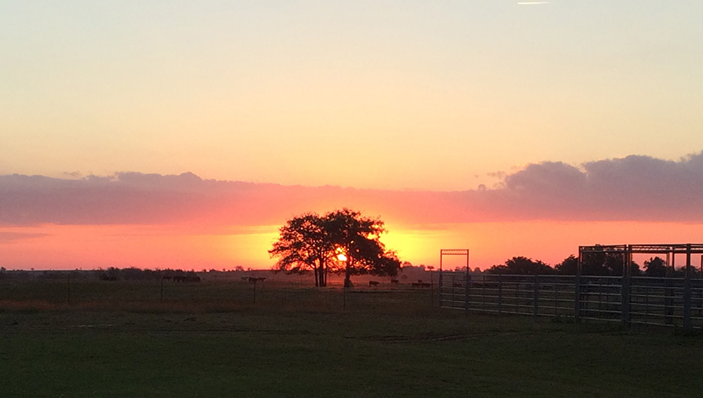 Sunrise at Oswalt Road Ranch