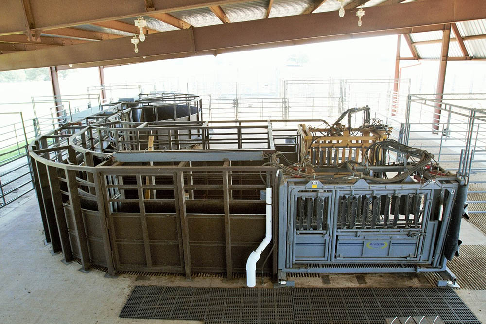 Oswalt Cattle Facility hydraulic cattle chutes