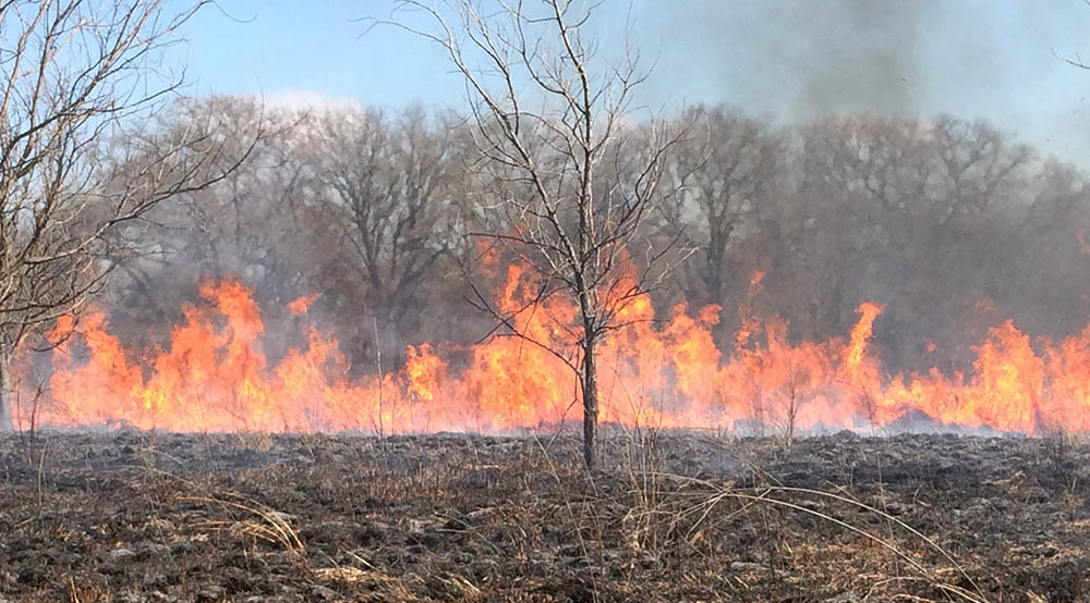 Prescribed burn taking place