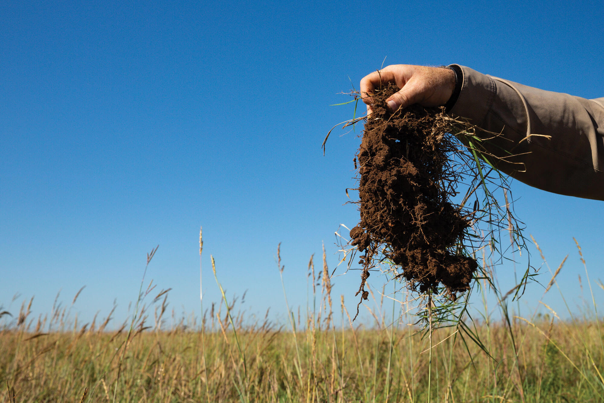Noble consultant holding up a clump of healthy soil over a pasture.