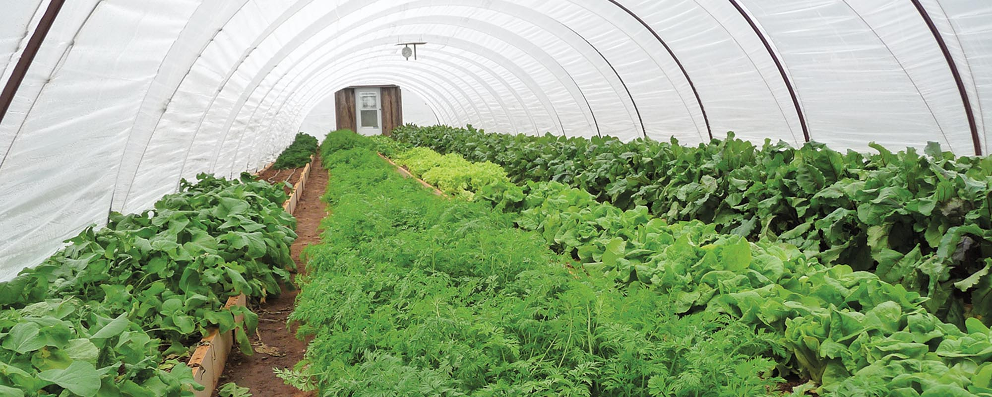 Citaten Hoop House : Hoop house horticulture creates many benefits