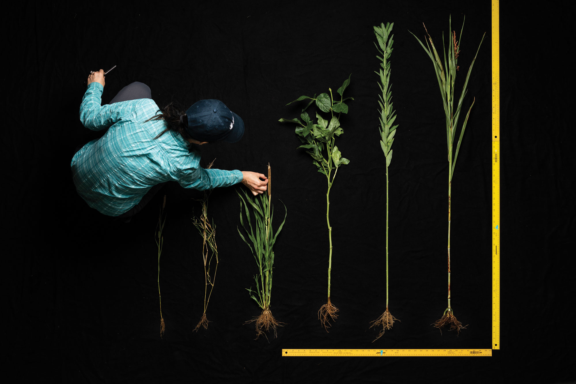 Maria Monteros measures plants.