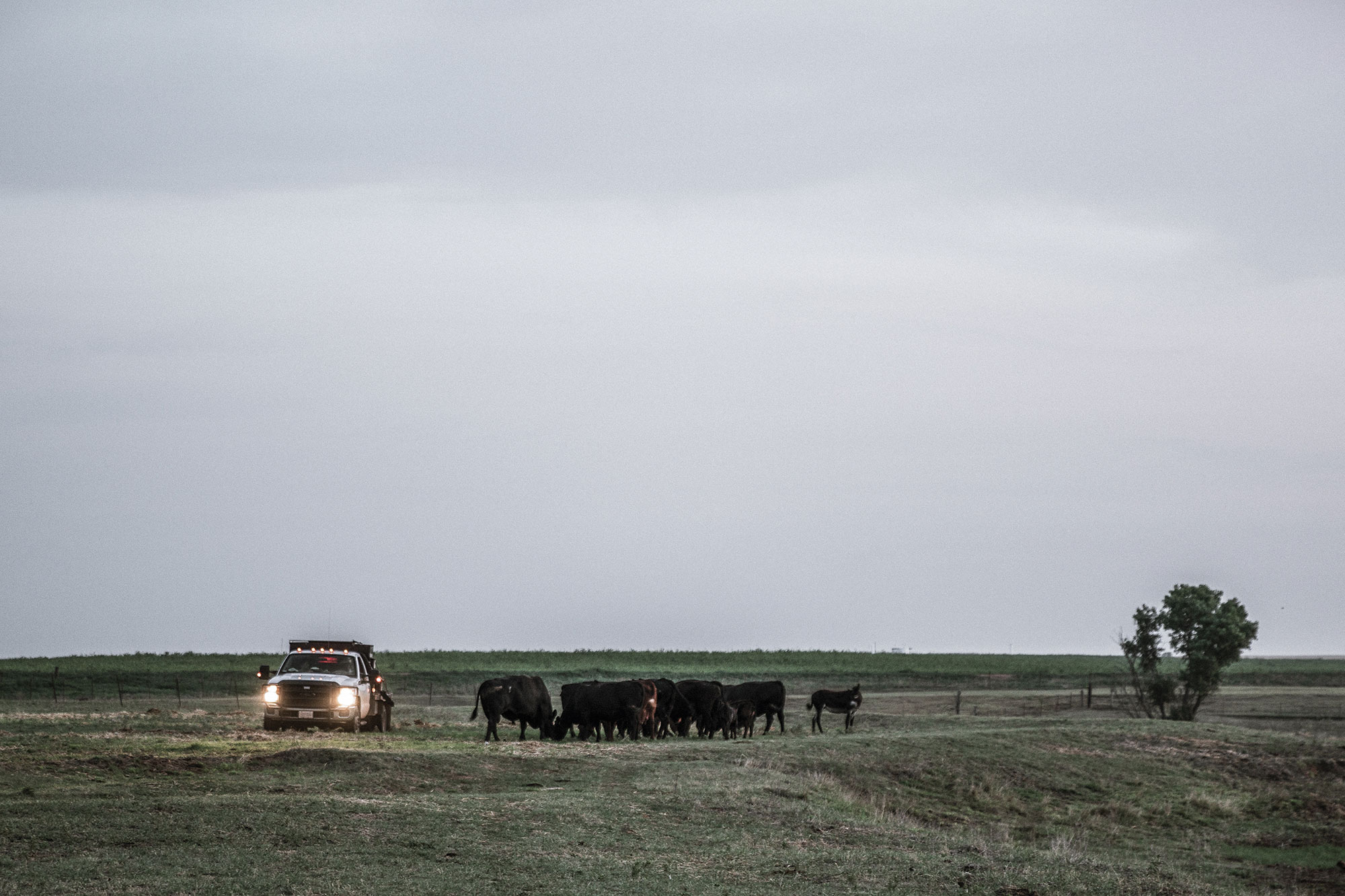Jimmy Emmons drives his truck through the pasture to check on his cattle.