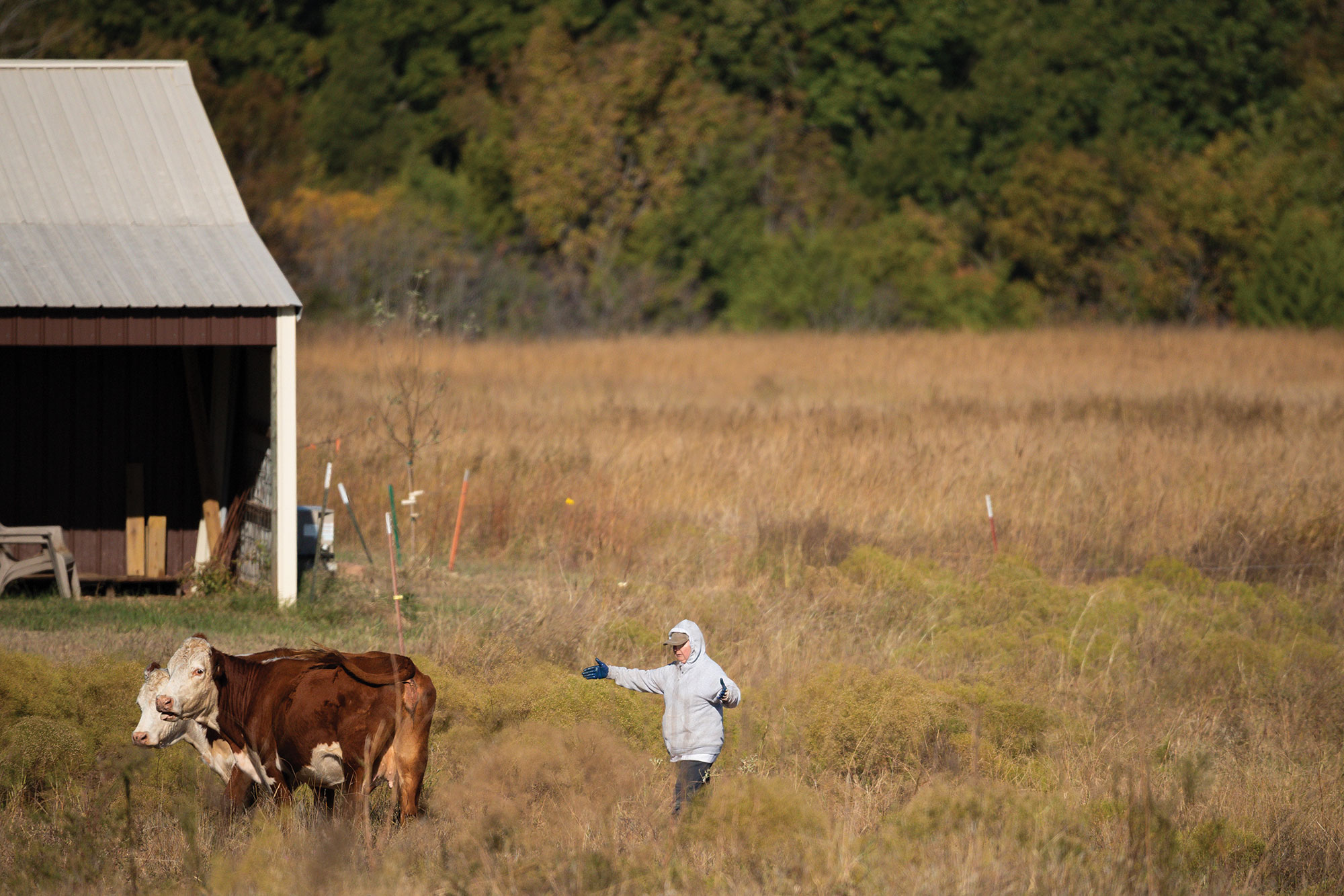Karen Payne (pictured) and her husband, William, raise Hereford and Angus cattle on Destiny Ranch, which was in poor condition when they bought it in 2006.