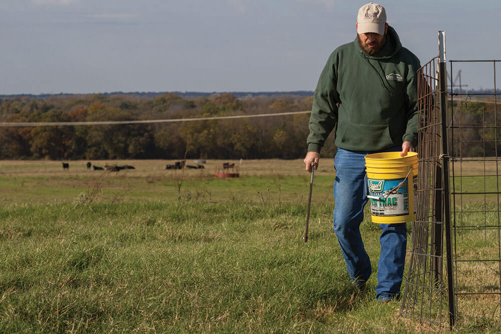Walking through pasture with bucket