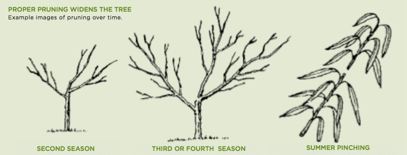 Plan on Pruning Your Fruit Trees
