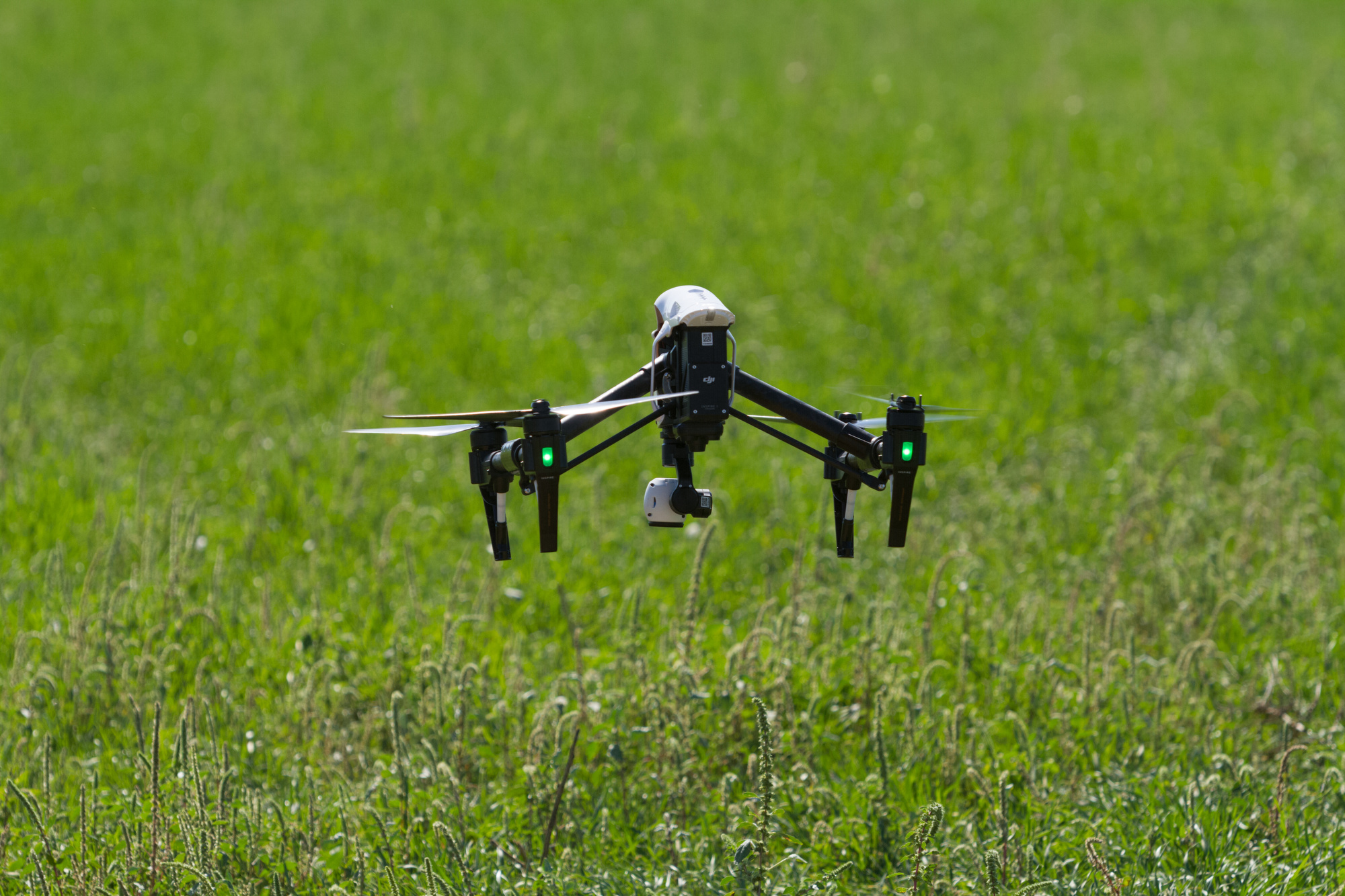 Drone Looks for Cotton Root Rot on Alfalfa