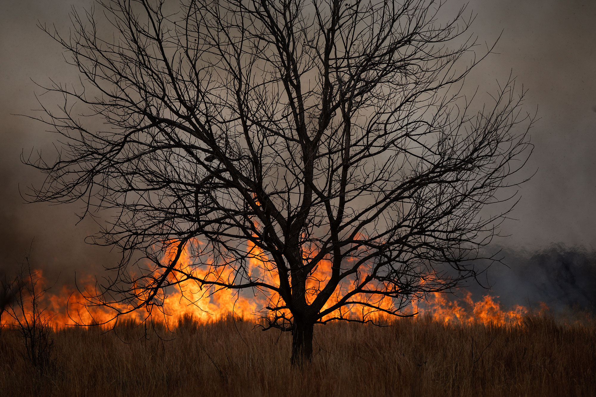 Prescribed fire burning in a pasture