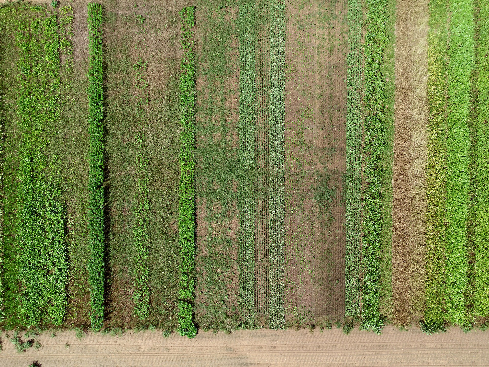 Overhead view of a crop field