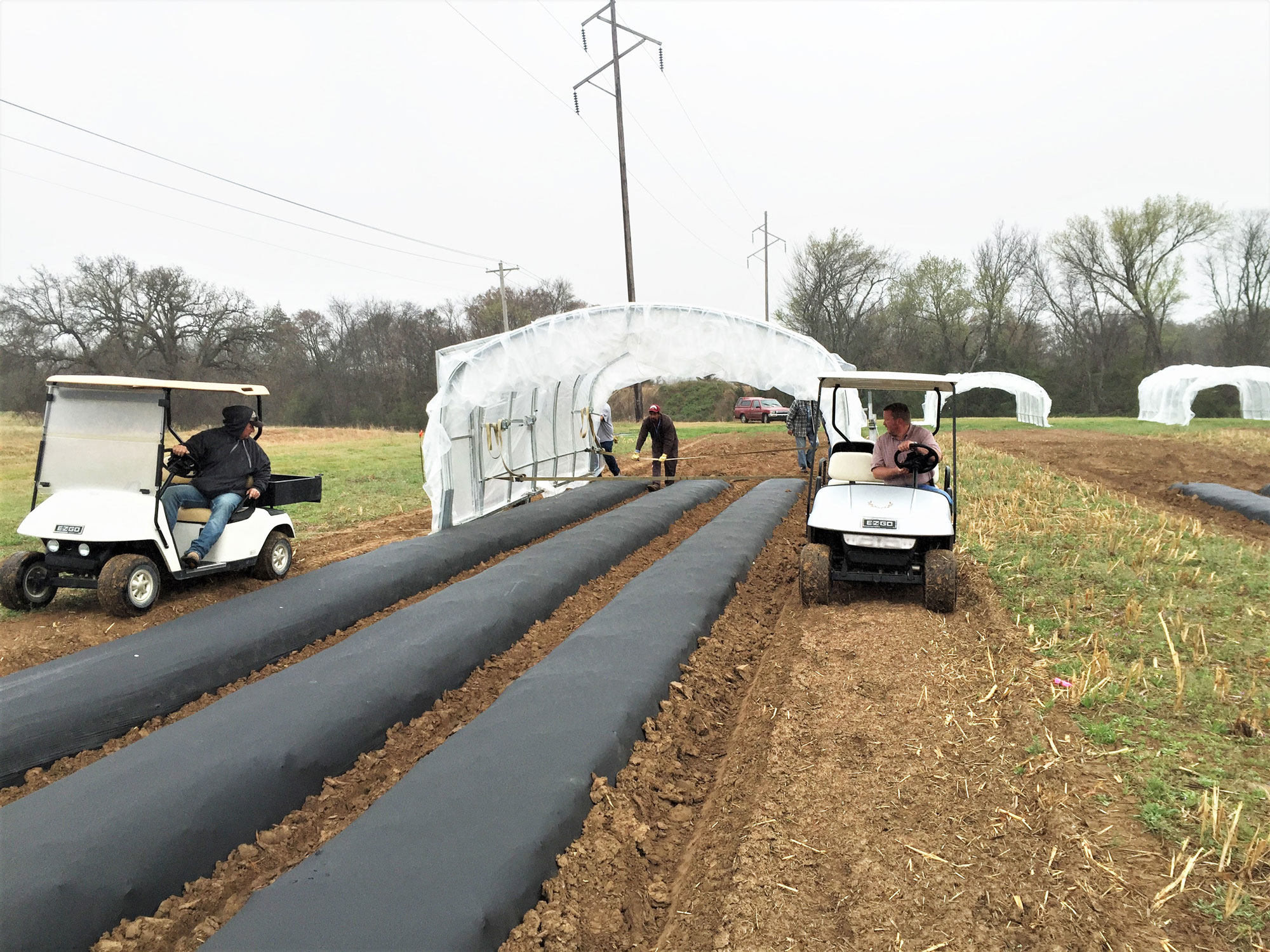 A high tunnel hoop house is moved onto a raised bed plot in preparation for establishing a tomato crop.