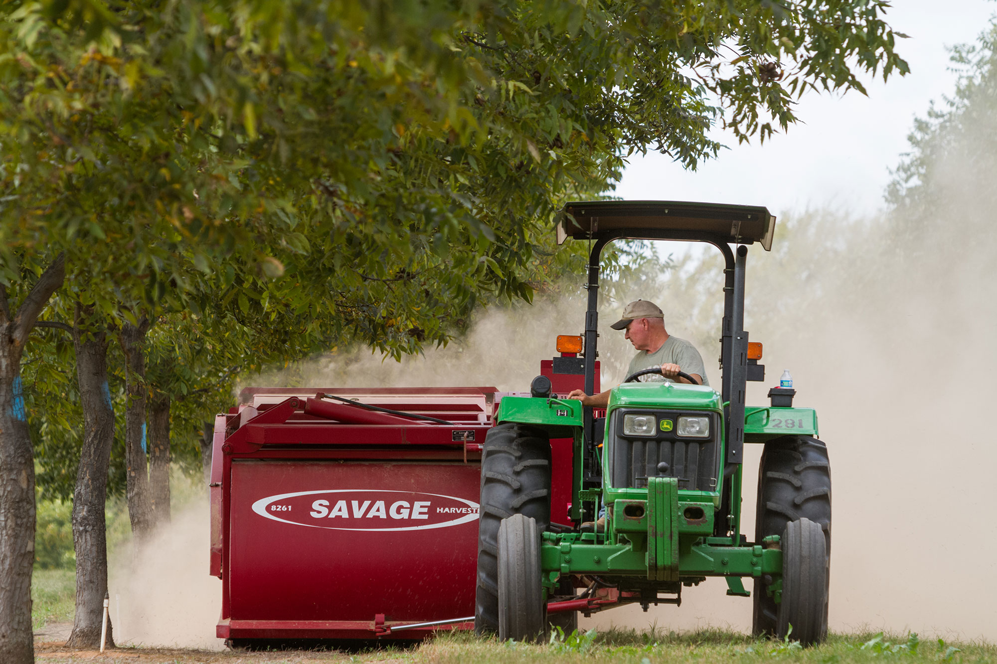 Pecan farmer working in orchard on tractor