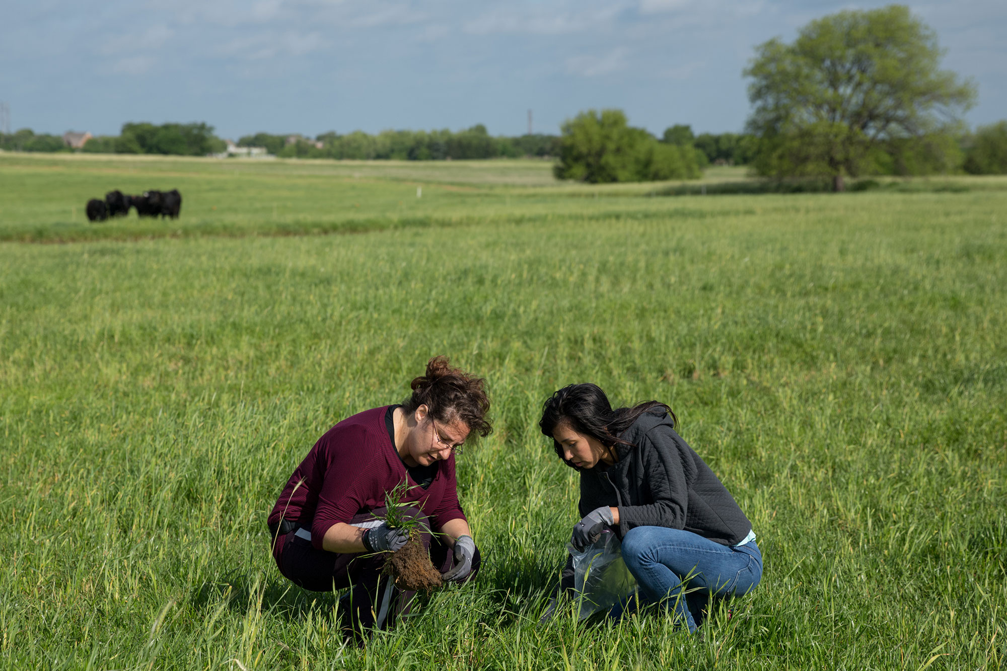 Researchers working in pasture
