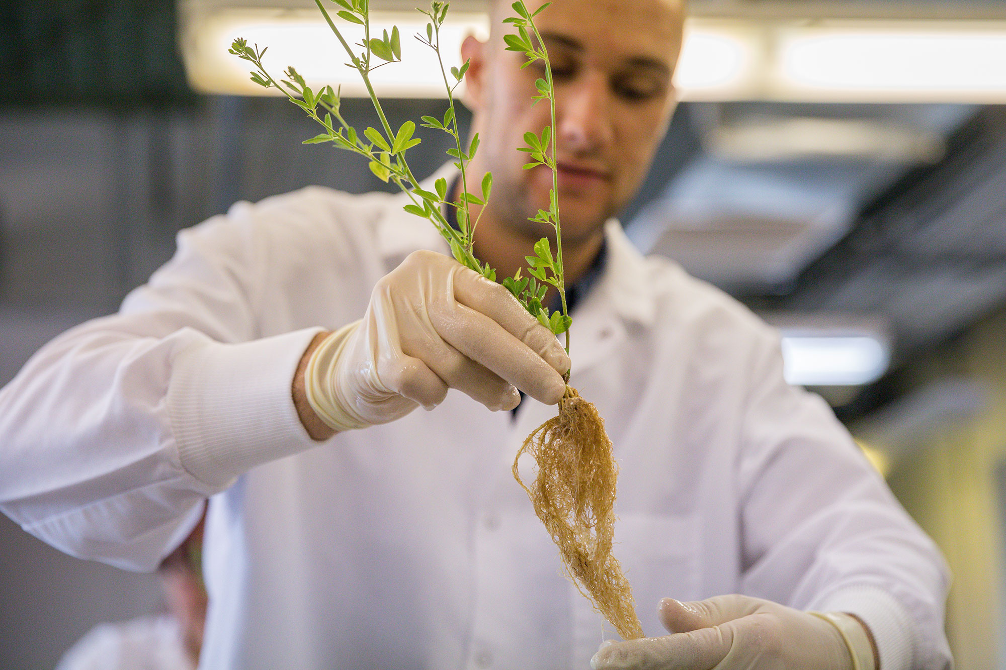 Researcher working with plant roots