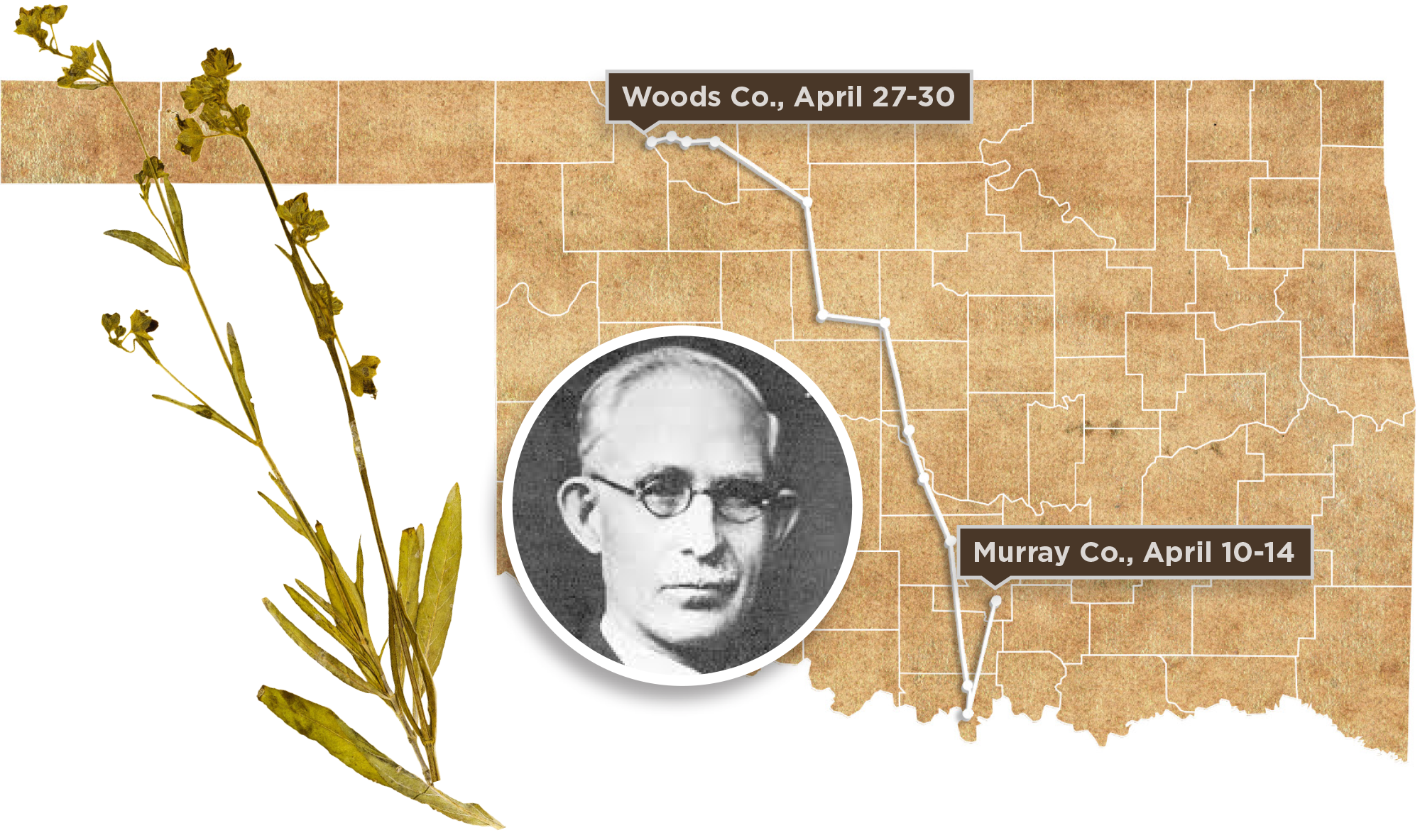 G.W. Stevens pictured over the map of his explorations in Oklahoma, along with a specimen of the White four o'clock plant