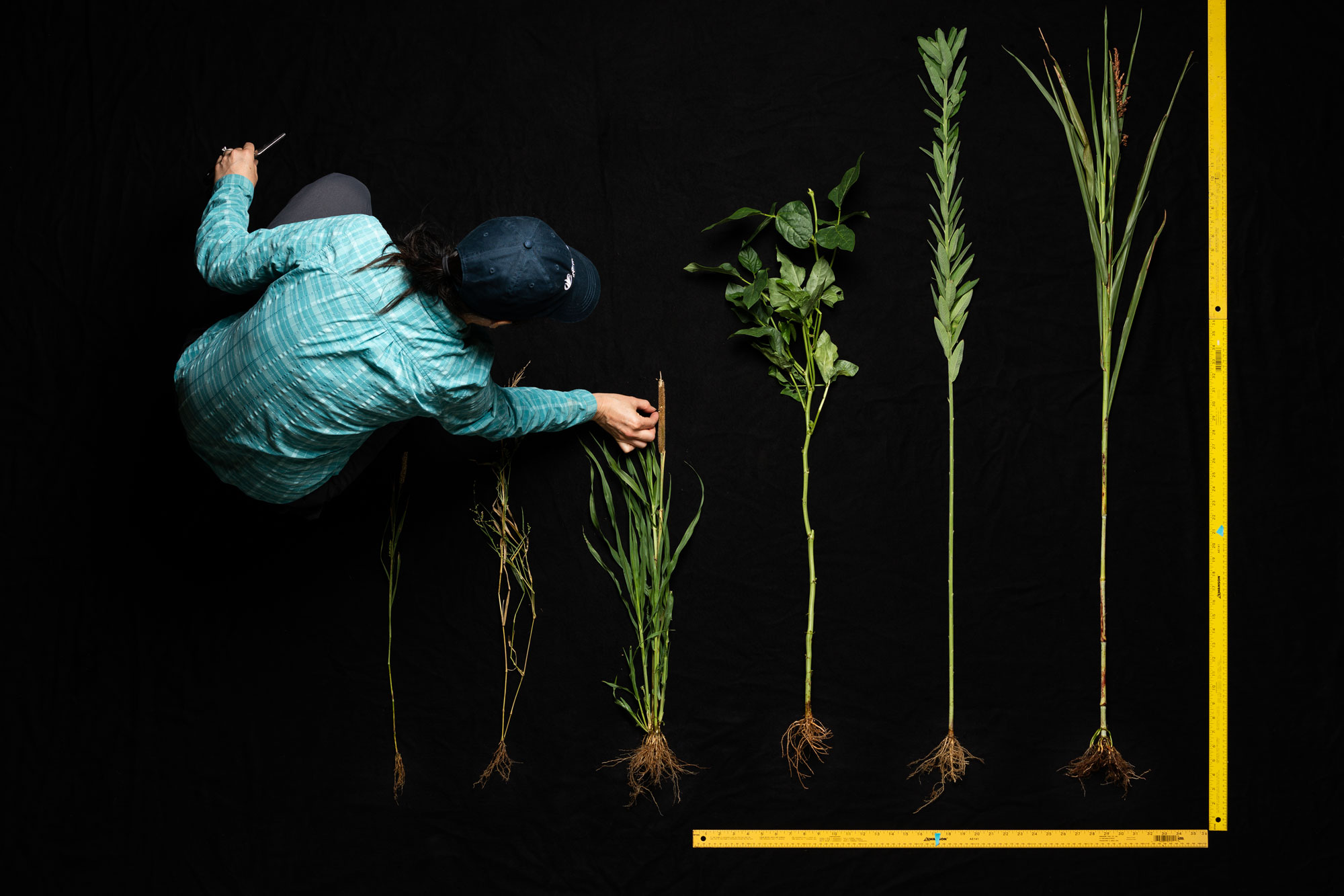 Maria Monteros measures the growth of different plants laid out next to a measuring ruler