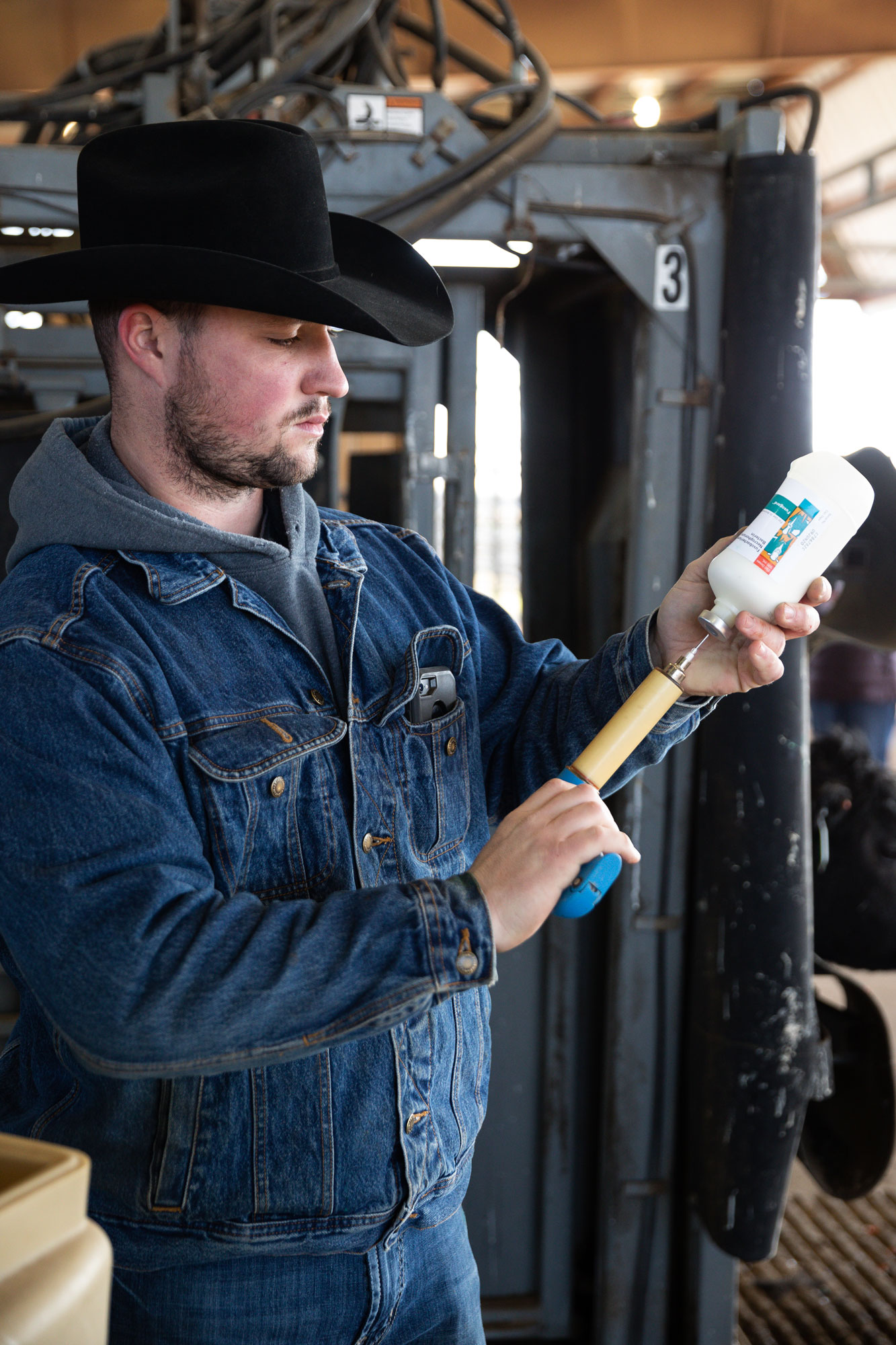 Rancher working with antibiotic syringe.