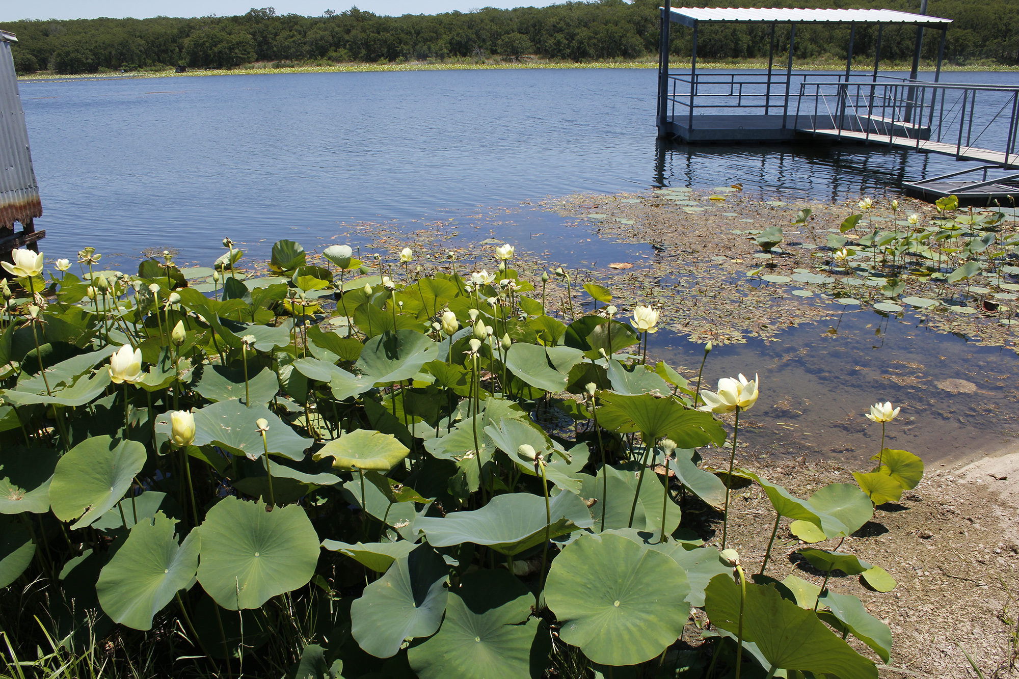 aquatic vegetation